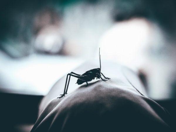 Kampf gegen Malaria verstärken