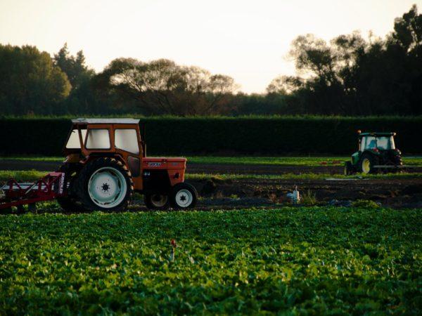 Biene oder Kuh? Die Besonderheiten der Siegerländer Landwirtschaft